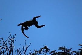 Sexual abuse flying monkeys in the family blame the victim